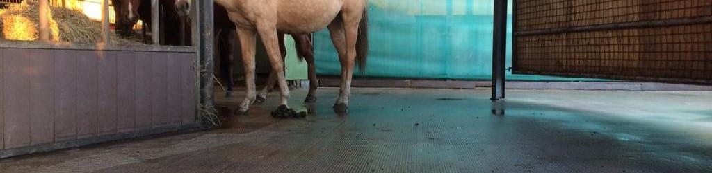 Paardenstalvloer opruwen